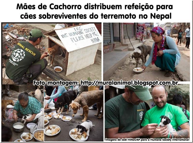 maes_cachorro_nepal2