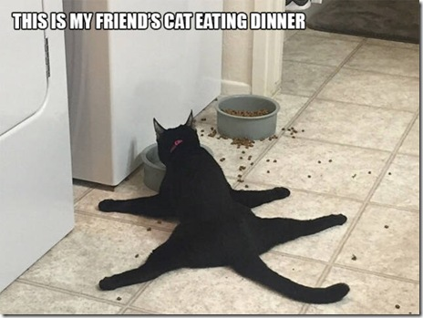 funny-cats-034