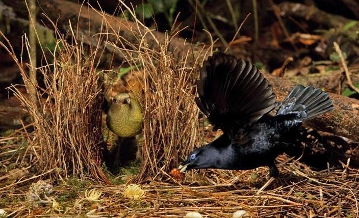 Burung Namdur
