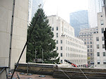 Rockefeller Tree without the scaffolds...it's FREE