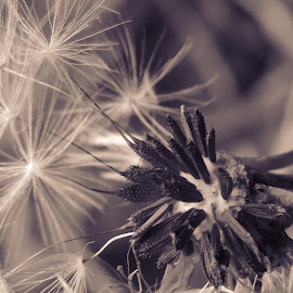 by Amanda Kavanagh - Novices Only Macro
