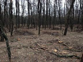лес19.jpg