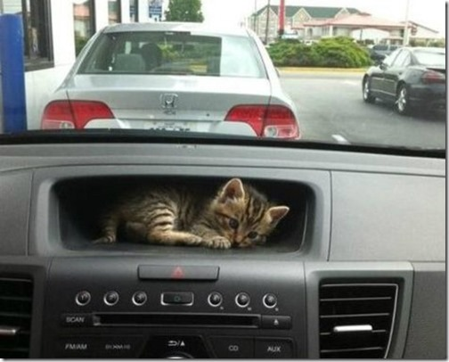 gatos sitios para esconderse (17)