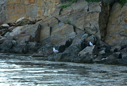 5. gulls on the rocks-kab