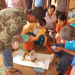 Yellow Bean Distribution at the Shan Camp - February 2012