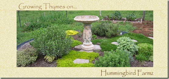 Growing Thymes HF5 copy