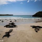 Dezenas de lobos marinhos e seus bebês - Floreana - Galápagos
