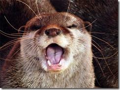 animal singing