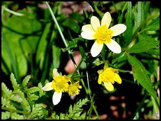 03c - Wildflowers - Yellow Whatever