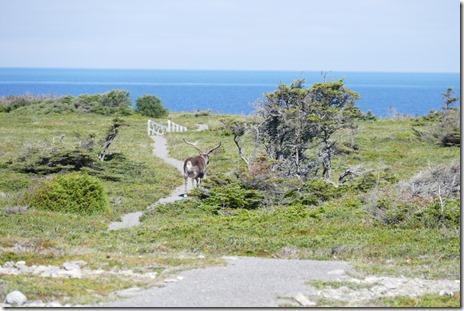 nl_cowhead_dorset_trail7