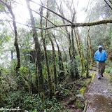 Trilha molhada - Parque Podocarpus - Vilcabamba, Equador