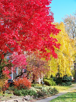 Red and yellow trees