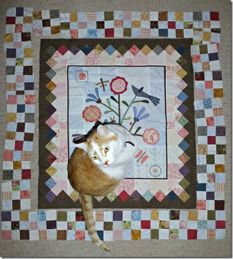 Joey on quilt