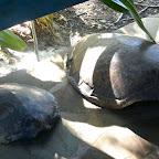 Local Ocean Trust, Schildkrötenpanzer © Foto: S. Schlesinger | Outback Africa Erlebnisreisen