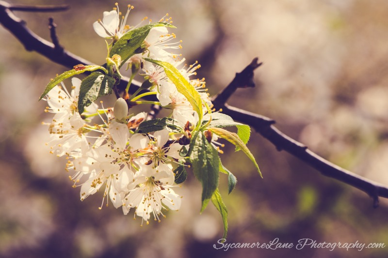 SycamoreLane Photography Nature-May 2015 (1)