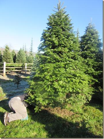 11-27 Christmas tree 2 (1)