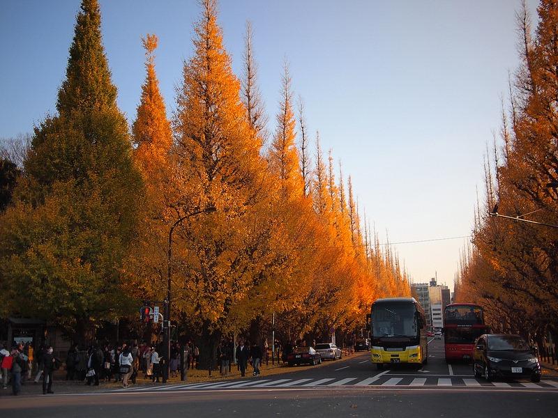 ginkgo-avenue-tokyo-11