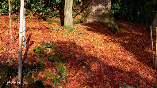 二尊院の散り紅葉