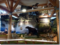 Big taxidermy display in the VC