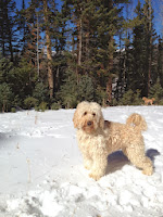 Gorgeousdoodles Buddy Bear in Beaver Utah.