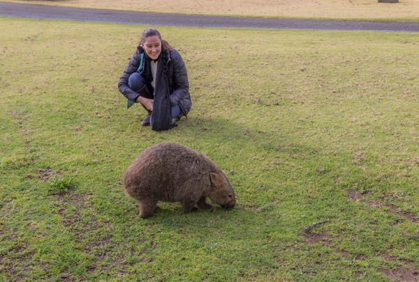 Wishful Thinking - Wombat Spotting