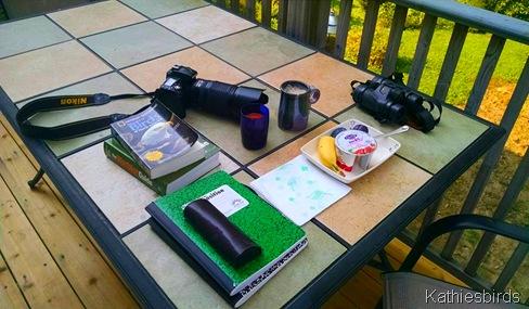 2. backyard birding 9-3-15