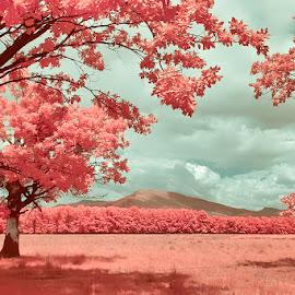 Springttime by Costin Mugurel - Landscapes Mountains & Hills ( mountains, nature, infrared, trees, landscape )