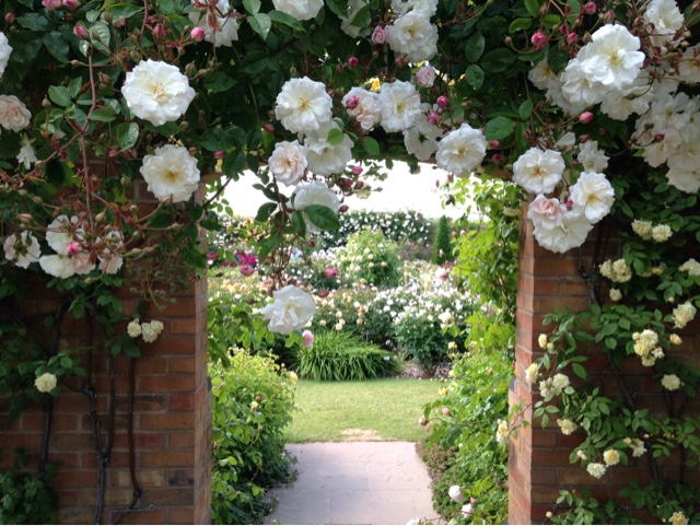 Rose archway at the David Austin Garden