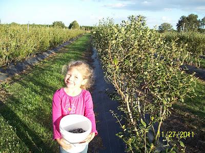Brooke picking blueberries,  Yum!