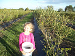 Brooke picking blueberries,  Yum!