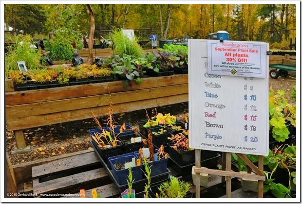 150911_AlaskaBG_plantsale