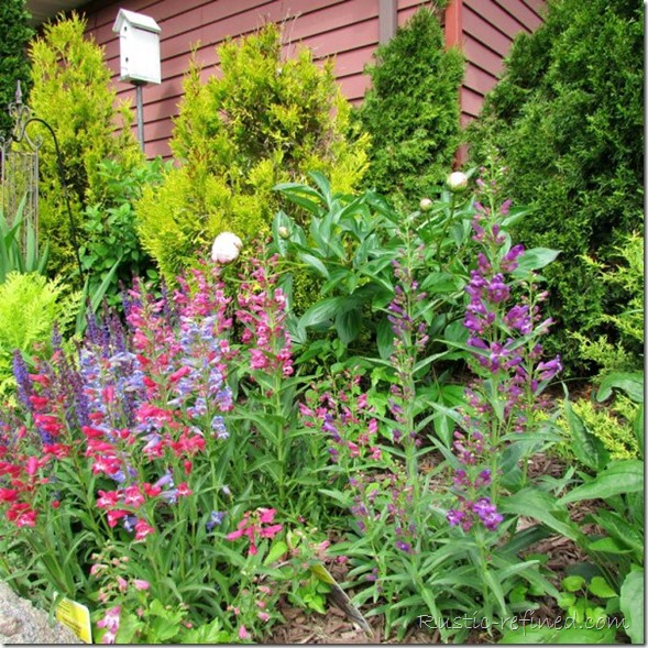 Perennial Garden Blooms in my Backyard