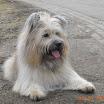 Buddy 2012-03-03 1.jpg