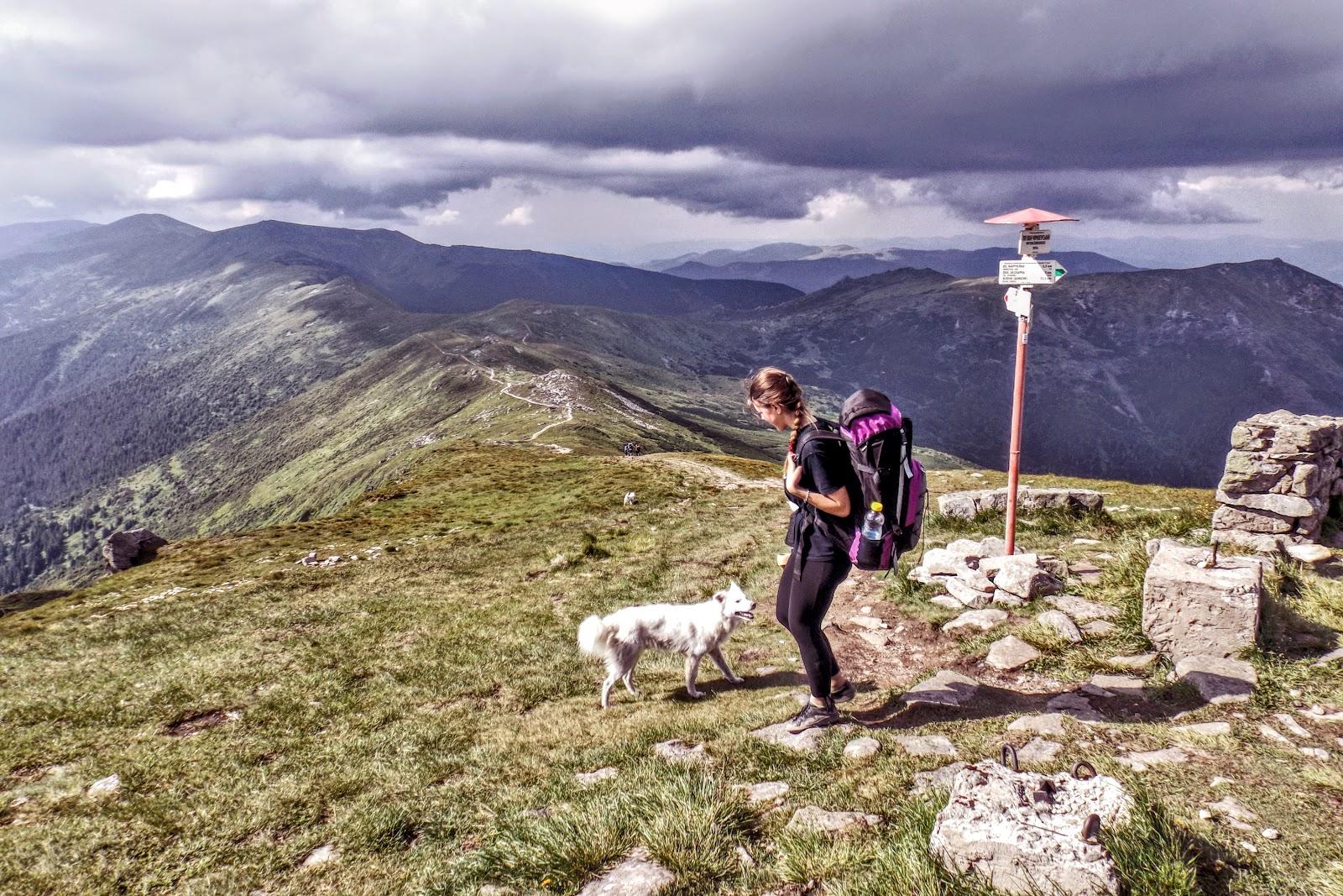 Чорногірський Хребет і вівчарський песик