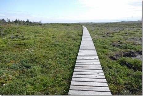 nl_cowhead_dorset_trail2