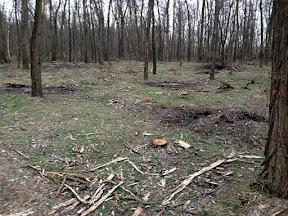 лес3.jpg