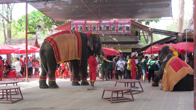 Elephants performing tricks at the Elephant Kraal.
