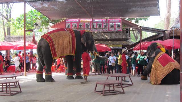 Elephants performing tricks at the Elephant Kraal.