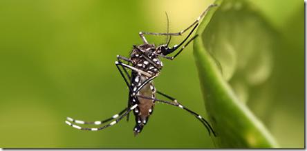 denguemusquito_2015