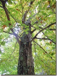 tree for blogger bkgd (768x1024)