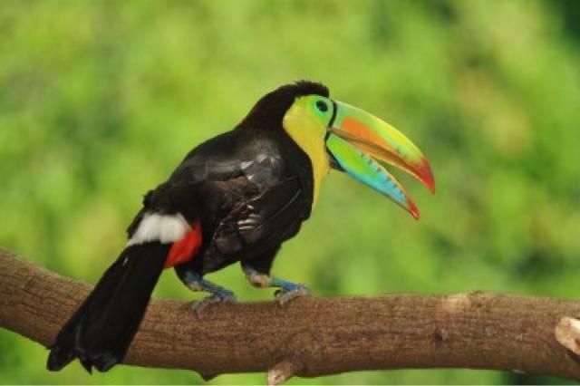 dyr i amazonas