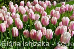 Glória Ishizaka - Keukenhof 2015 - tulipa 18