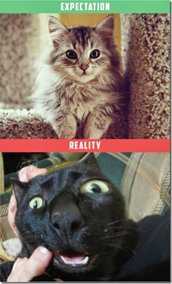 cats-expectations-reality-002