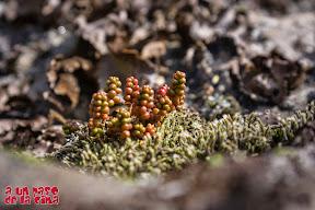 La vida se abre paso sobre las rocas. ©aunpasodelacima