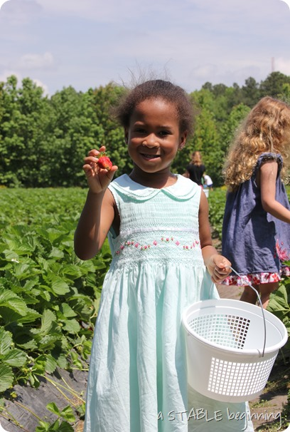 Strawberry picking 011