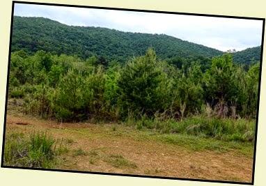 01b - Lake Powhatan - View Behind Site 46