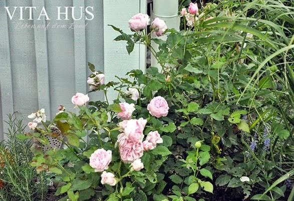 mmVitahus-Schwedenhaus-0018-201410051