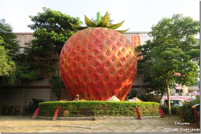 大湖草莓 (29)