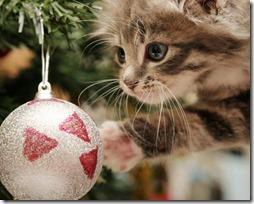 77- gatos navidad (3)- buscoimagenes