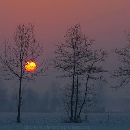 waiting the warmth of the day by Alberto Martinenghi - Landscapes Sunsets & Sunrises ( canon, colors, sunset, snow, trees, sunrise, landscape )